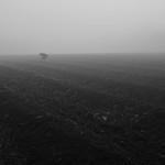 Asparagus in the mist